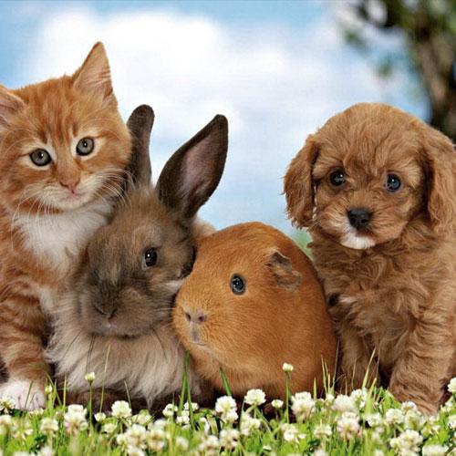 Contact Japfa Pet House